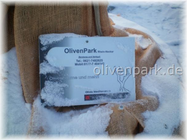 olivenb ume olivenbaum verkauf und vermietung gestaltungen. Black Bedroom Furniture Sets. Home Design Ideas